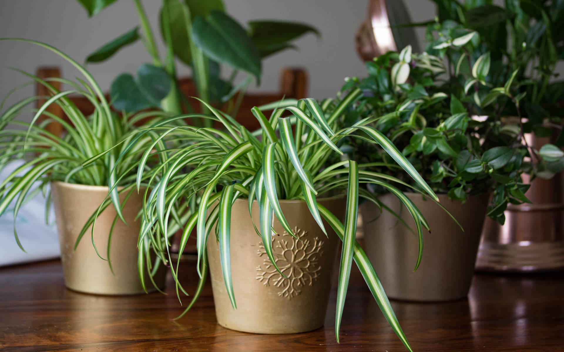 What Mel Did - houseplants